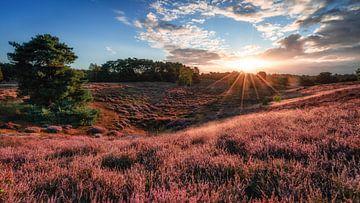 Sonnenaufgang in der Westruper Heide von Steffen Peters