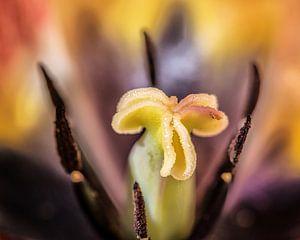 Zicht op het binnenste van een tulp