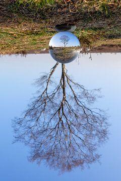 Glazen boom van Maarten Kooij