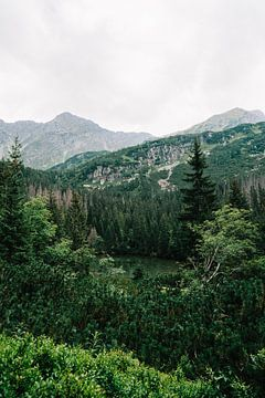 Montagnes Tatra Slovaquie VII sur Suzanne Spijkers