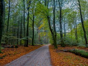 Der Speulderwald von Natascha Worseling