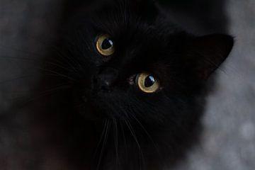 Schwarze Katze mit grünen Augen von Angelica Bouwmeester