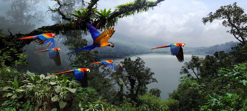 vlucht van papegaaien over het oerwoud van Paulus Geeve