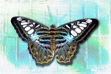 vlinder, vrijheid van Rietje Bulthuis