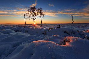 Het verbrande bos bij zonsopgang.