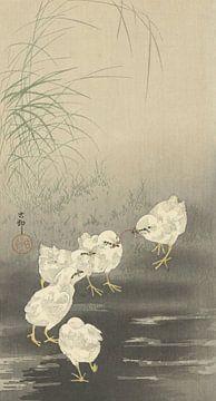 Les poussins et le ver d'Ohara Koson