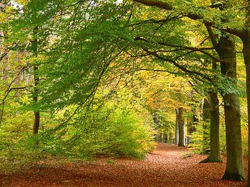 Herbstfarben im Wald von Corinne Welp