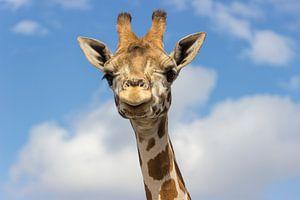Nubische Giraffe