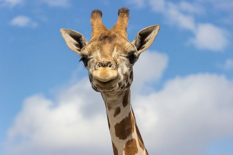 Nubische Giraffe von Rob Legius