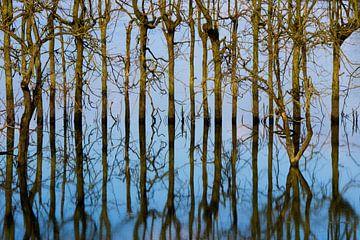 Spiegelung von Bäumen von Irene Damminga
