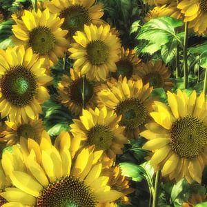 Zonnebloemen in close up