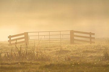 Der Zaun im goldenen Schein der Morgensonne von Michel Geluk