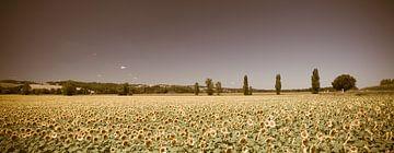 Zonnebloemveld Panorama Vintage look von