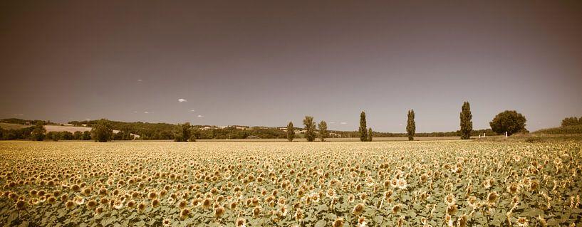 Zonnebloemveld Panorama Vintage look van Wim Slootweg