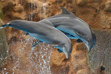 Delfinshow im Loro Parque van Ulrich Brodde