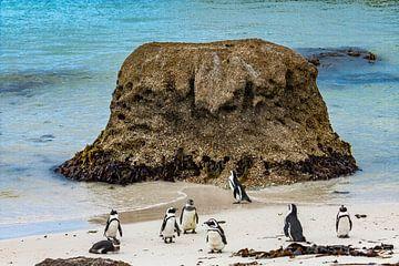 Pinguïns op het strand van Zuid-Afrika van Easycopters