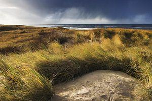 In de duinen van