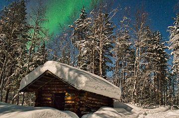 Les aurores boréales dans le parc national de Pasvik sur Kai Müller