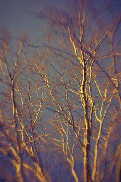 Een berk in ondergaand avondlicht van Robert Wiggers