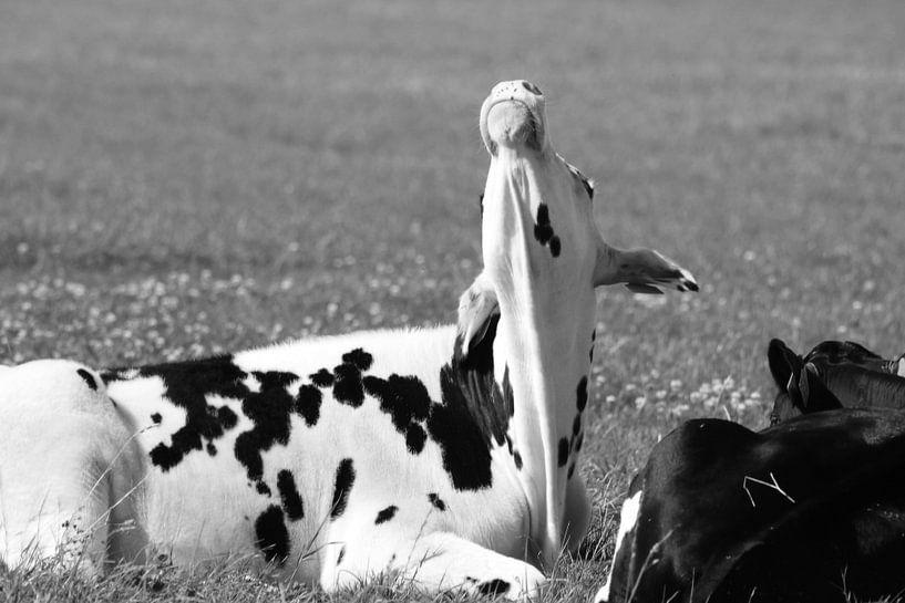 Zwart-Wit    Koe met kapsones / Old look van Anja Kok