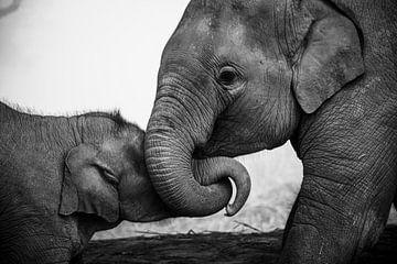 Speelse olifanten in zwart/wit van Nick van der Blom
