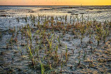 Strandlandschap Ameland van Jan Hoekstra