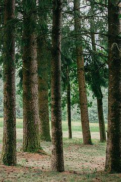 naaldbomen van Huib Vintges