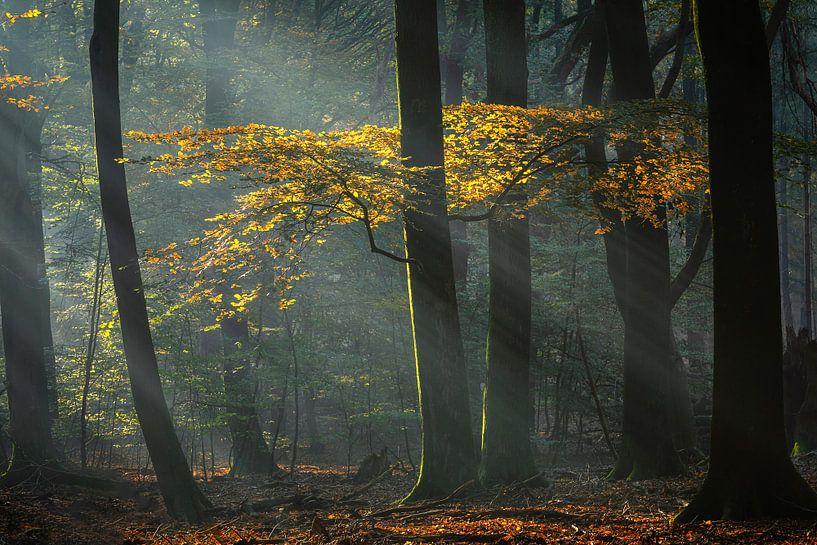 Perdu dans la forêt magique sur Costas Ganasos