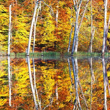 Herbstspiegelung von Angelika Stern