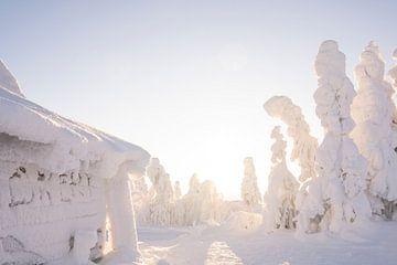 Kota in de sneeuw in Fins Lapland van elma maaskant