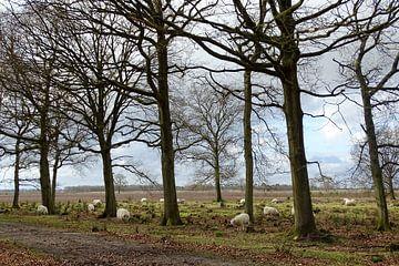 Schaapskudde in Drenthe van Tineke Laverman
