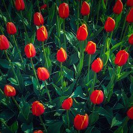 Groen en Rood van Joris Pannemans - Loris Photography