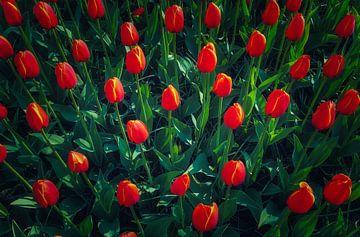 Grün und Rot von Joris Pannemans - Loris Photography