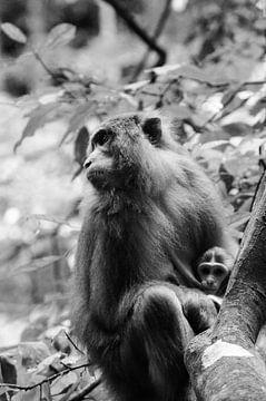 Mama makaak  met haar jong von Zoe Vondenhoff