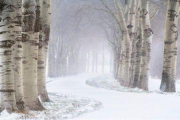 Een mooie laan met bomen in de sneeuw op een koude winterdag net buiten Den Bosch. van Jos Pannekoek