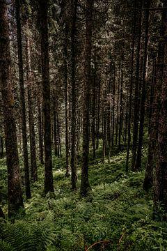 Durch die Bäume ist der Wald nicht mehr von Wilke Tiellemans