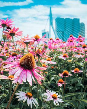 Kleurrijke bloemen Rotterdam van Dave Oudshoorn