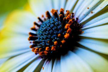 Blühende Details von pixxelmixx