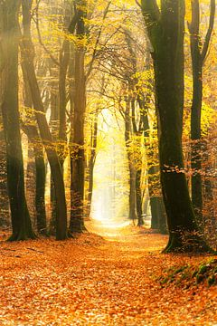 Sentier à travers une forêt d'automne dorée par une belle journée d'automne ensoleillée. sur