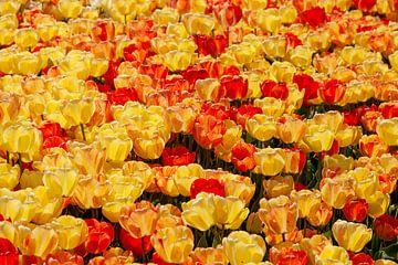 Bloemen zee van gele & rode tulpen, in Istanbul, Turkije.