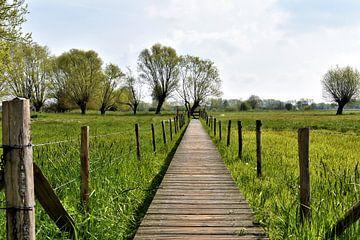 wandelweg in de polders van Heidi Pype