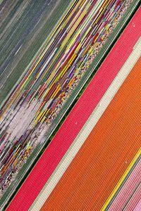 Kleurrijk bloembollenlandschap vanuit de lucht van Robert Riewald