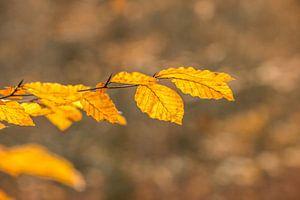 Herbstblatt mit Bokeh