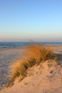 Zauberhafte Abendsonne von Ostsee Bilder