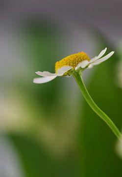 Lonely Flower von Monique Dijkgraaf