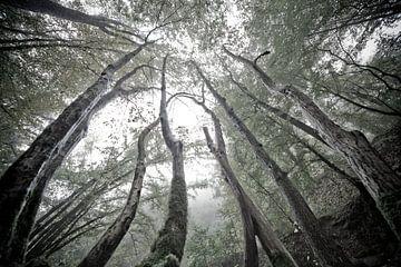 Mystische Bäume von Jacqueline Lemmens