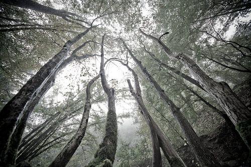 MYSTIEKE BOMEN - MYSTIC TREES van Jacqueline Lemmens