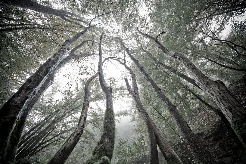 Mystieke bomen van Jacqueline Lemmens