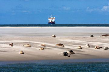 Sandbank  mit Dichtungen auf dem Watt von Dennis Wierenga