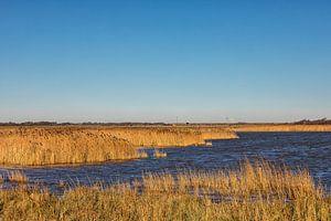 Natuurgebied, water en winter riet